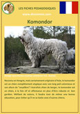fiche identite chien komondor caractere origine comportement poil race