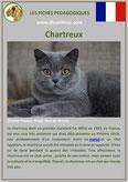 fiche chat identite race chartreux origine comportement caractere poil sante