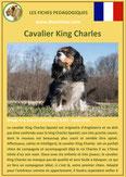 fiche chien race cavalier king charles origine caractere comportement poil sante couleur