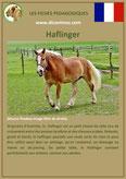 fiche cheval chevaux  identite race haflinger origine comportement caractere robe sante