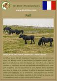 fiche cheval chevaux  identite race poney fell origine comportement caractere robe sante
