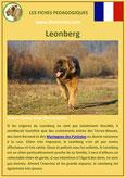 fiche chien race leonberg origine caractere comportement poil sante couleur