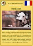 fiche chien identite race dalmatien origine comportement caractere poil sante