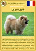 fiche chien race chow chow origine caractere comportement poil sante couleur