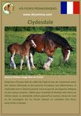 fiche cheval chevaux  identite race clydesdale origine comportement caractere robe sante