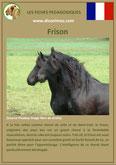 fiche cheval chevaux  identite race frison origine comportement caractere robe sante