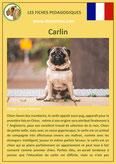 fiche chien pdf carlin comportement origine caractere poil sante