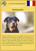 fiche chien pdf rottweiler comportement origine caractere poil sante