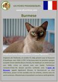 fiche chat pdf race burmese comportement caractere origines poil sante couleu