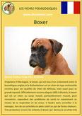 fiche chien identite race boxer origine comportement caractere poil sante