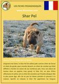 fiche chien pdf shar pei comportement origine caractere soin poil