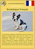 fiche chien identite race bouledogue français origine comportement caractere poil sante