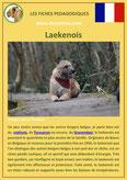fiche chien pdf berger belge laekenois comportement origine caractere poil sante