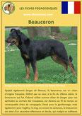 fiche chien identite race beauceron berger beauce origine comportement caractere poil sante