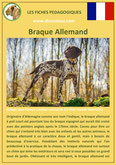 fiche chien pdf braque allemand comportement origine caractere poil sante