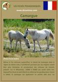 fiche cheval chevaux  identite race camargue origine comportement caractere robe sante