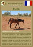 fiche cheval chevaux  identite race brumby origine comportement caractere robe sante