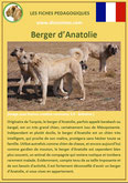 fiche chien identite race berger anatolie origine comportement caractere poil sante