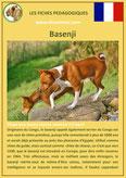 fiche chien race basenji origine caractere comportement poil sante couleur