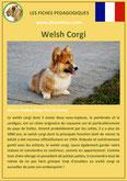 fiche chien pdf welsh corgi comportement origine caractere soin poil