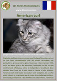fiche chat pdf race american curl comportement caractere origines poil sante couleu
