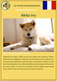 fiche chien identite race akita inu origine comportement caractere poil sante
