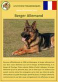 fiche chien identite race berger allemand origine comportement caractere poil sante