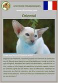 fiche chat race oriental comportement origine caractere poil sante