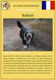 fiche chien identite race bobtail origine comportement caractere poil sante