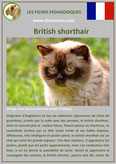 fiche chat pdf race british sorthair comportement caractere origines poil sante couleu