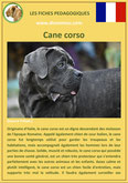 iche chien pdf cane corso comportement origine caractere soin poil