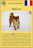 iche chien pdf shiba inu comportement origine caractere soin poil