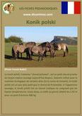 fiche cheval chevaux  identite race konik polski origine comportement caractere robe sante