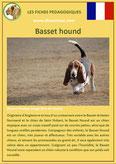 fiche chien identite race basset hound origine comportement caractere poil sante