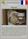 fiche chat identite race abyssin origine comportement caractere poil sante