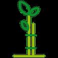 Grafik Bepflanzungen