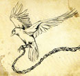 SITKA - Zugvogel