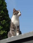 Katzensitter Bad Homburg, Katzensitting, Tierbetreuung, Katzenbetreuung