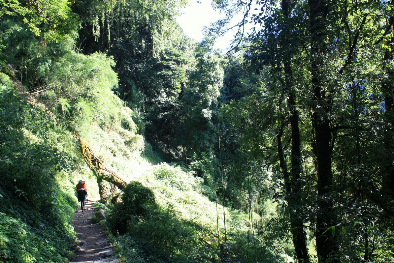 Cheminement en forêt pour la première partie de marche de cette longue journée