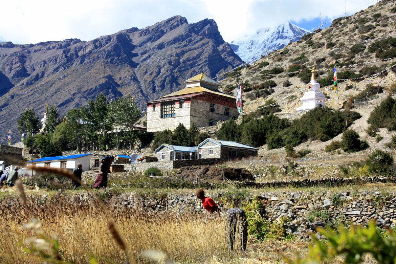 Les hommes et femmes sont dans les champs pour la récolte - Village de Ngawal (3 660 m)