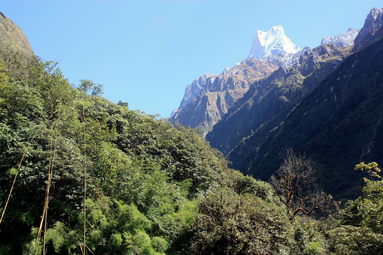 1ère partie de la journée sous la forêt dominé par le Machapuchare (6 997 m)
