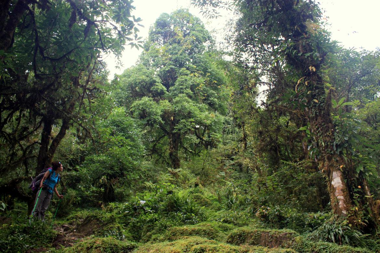 Nouvelle traversée d'une forêt dense et humide