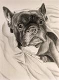 Kunst-meiner-Seele Hundezeichnung nach Foto