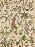 Historische Illustration - Waldfrüchte