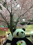 金閣人さん:上野駅構内の桜