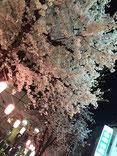 恵利子さん:夜桜