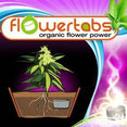 flower tabs germination graine