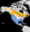 Karte zur Verbreitung der Ringschnabelente