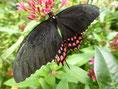 schwarz - pink