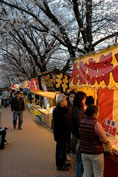 OL虹子さん:埼玉県草加市・稲荷葛西用水